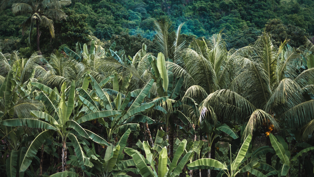 Bali, Indonesia, jungle, palm trees, tropical