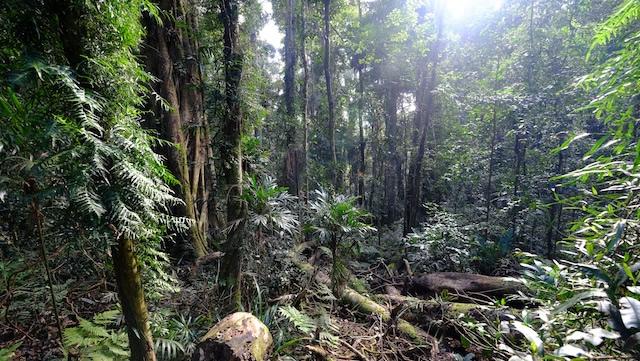 ex-cyclone-debbie-Lamington-National-Park-Binna-Burra-Gold-Coast-bushwalking-hiking