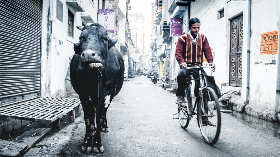 Cow-and-bike-in-the-street-Varanasi-India