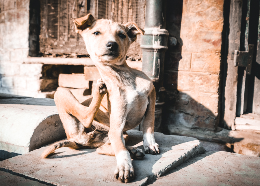 Stray-dog-varanasi-India-Nathan-Brayshaw