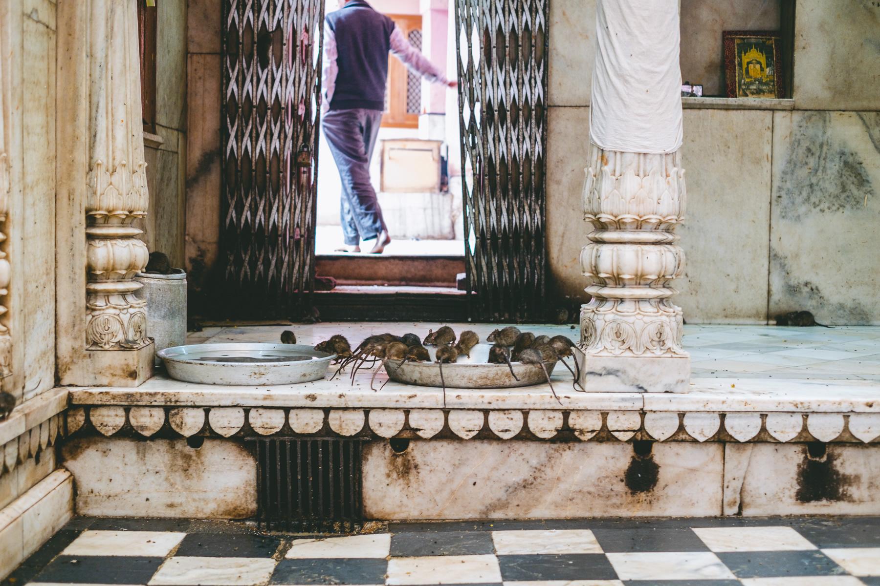 Karni Mata, Hindu Temple, Deshnoke, Rajasthan, India, Nathan Brayshaw