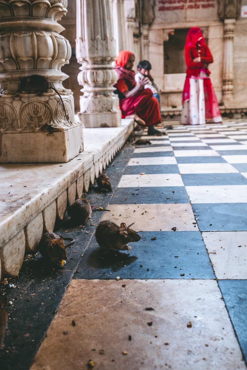 Rat Temple, Karni Mata, Bikaner, Deshnoke, Rajasthan, India