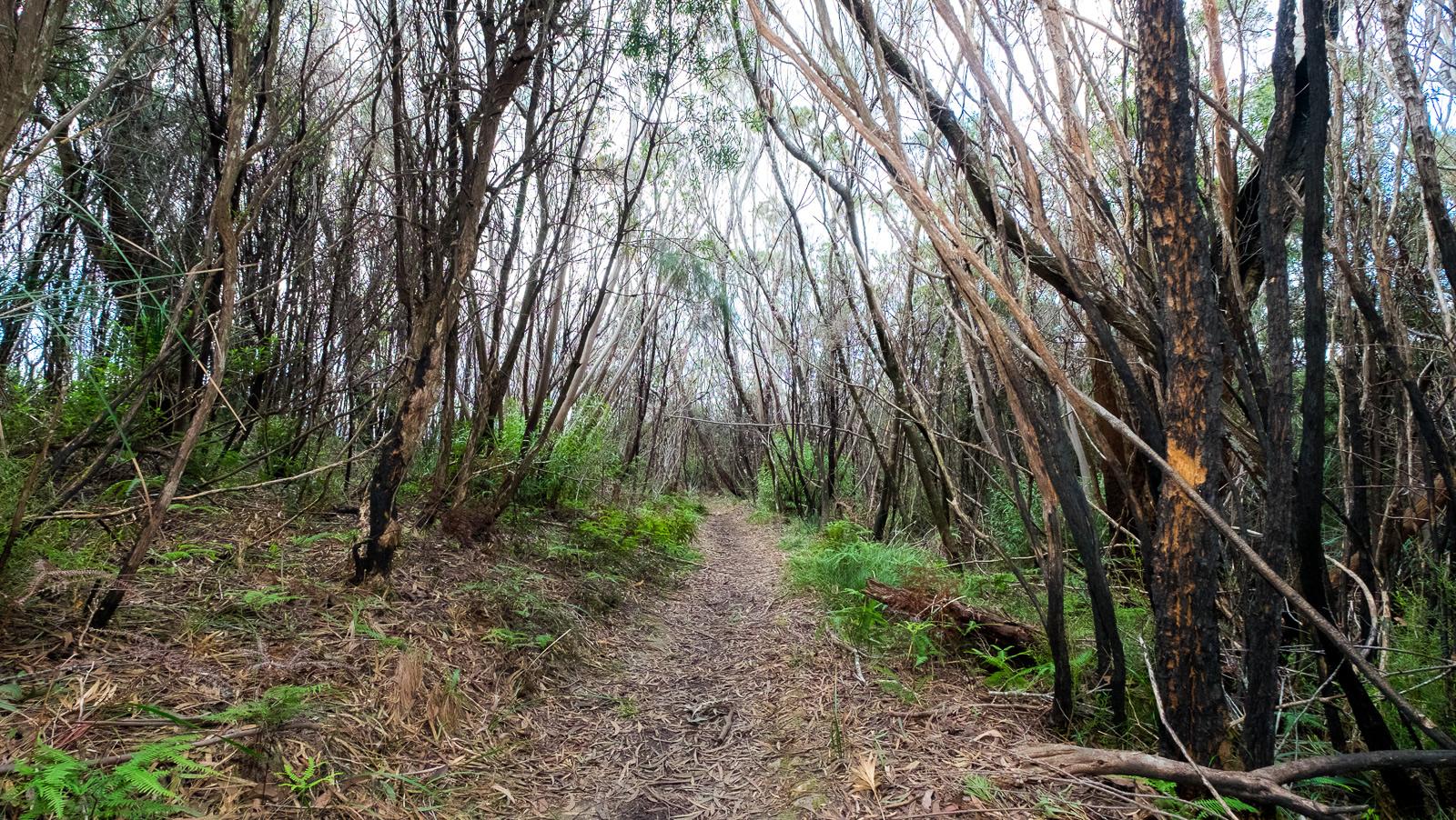 Mallee-Lamington-National-Park-Binna-Burra-Gold-Coast-bushwalking-hiking