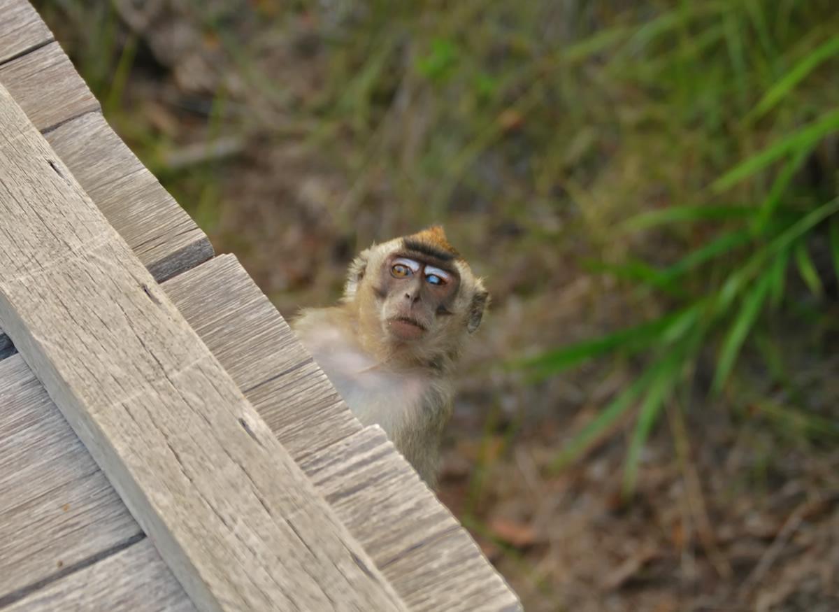 borneo, camp leakey, monkey, travel photography, travel blog,