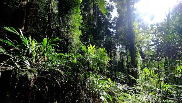 Rainforest-Lamington-National-Park-Binna-Burra-Gold-Coast-bushwalking-hiking