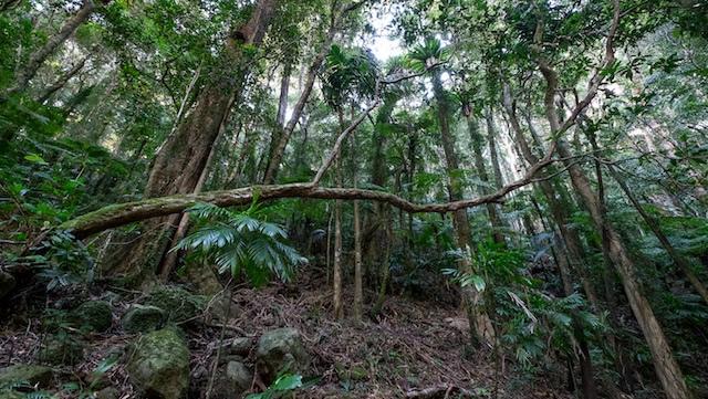 Warm-temperate-rainforest-Lamington-National-Park-Binna-Burra-Gold-Coast-bushwalking-hiking